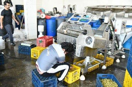 سالن تولید زیتون باغداران